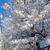 イメージ:ナースプラザに桜が咲いた